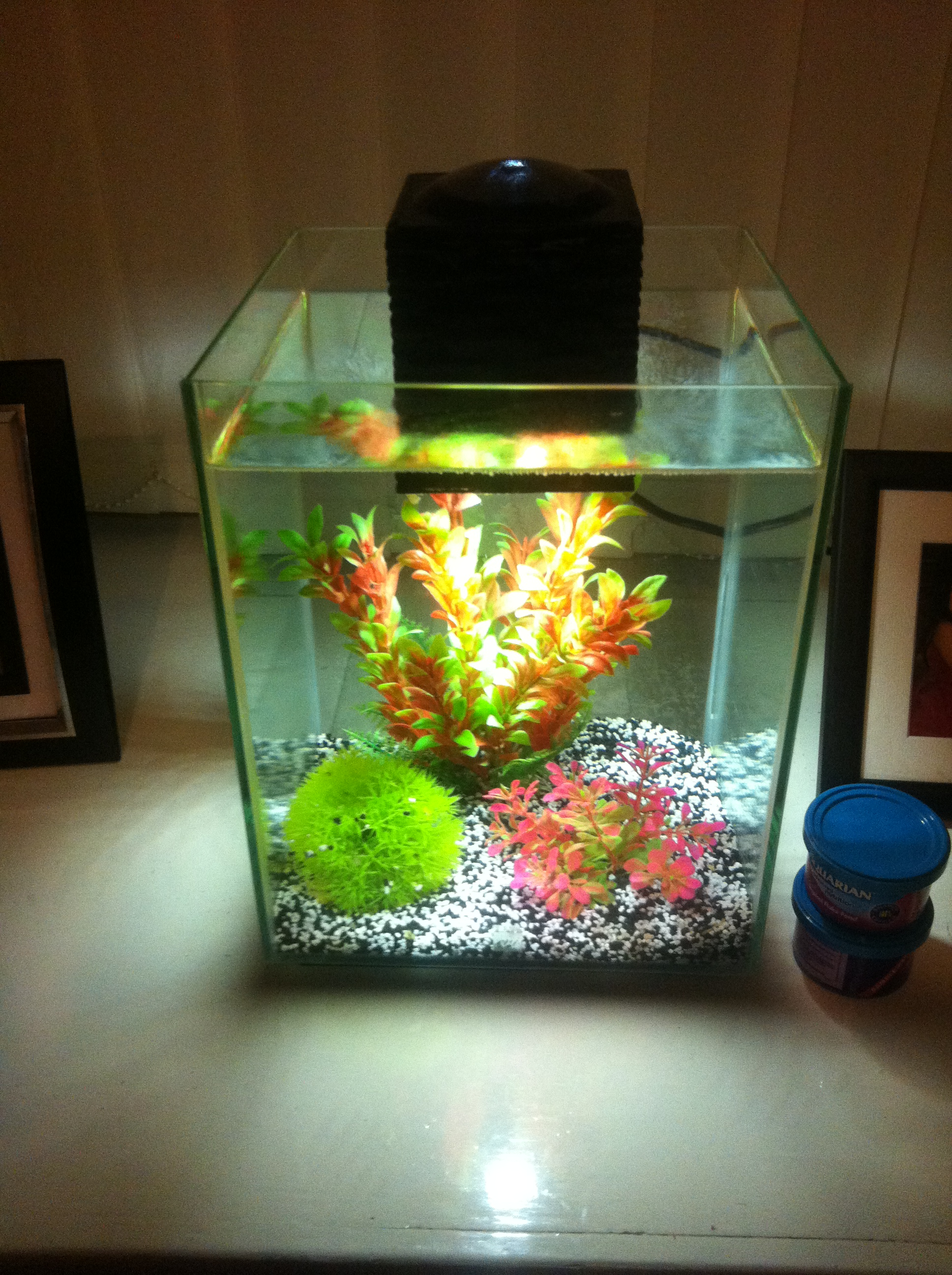 Fluvel chi fish tank daily brew reviews for Fish tank review