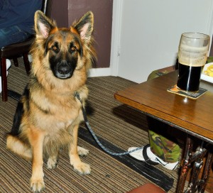 dog friendly pubs nice to have a lovely one not far from where i live.